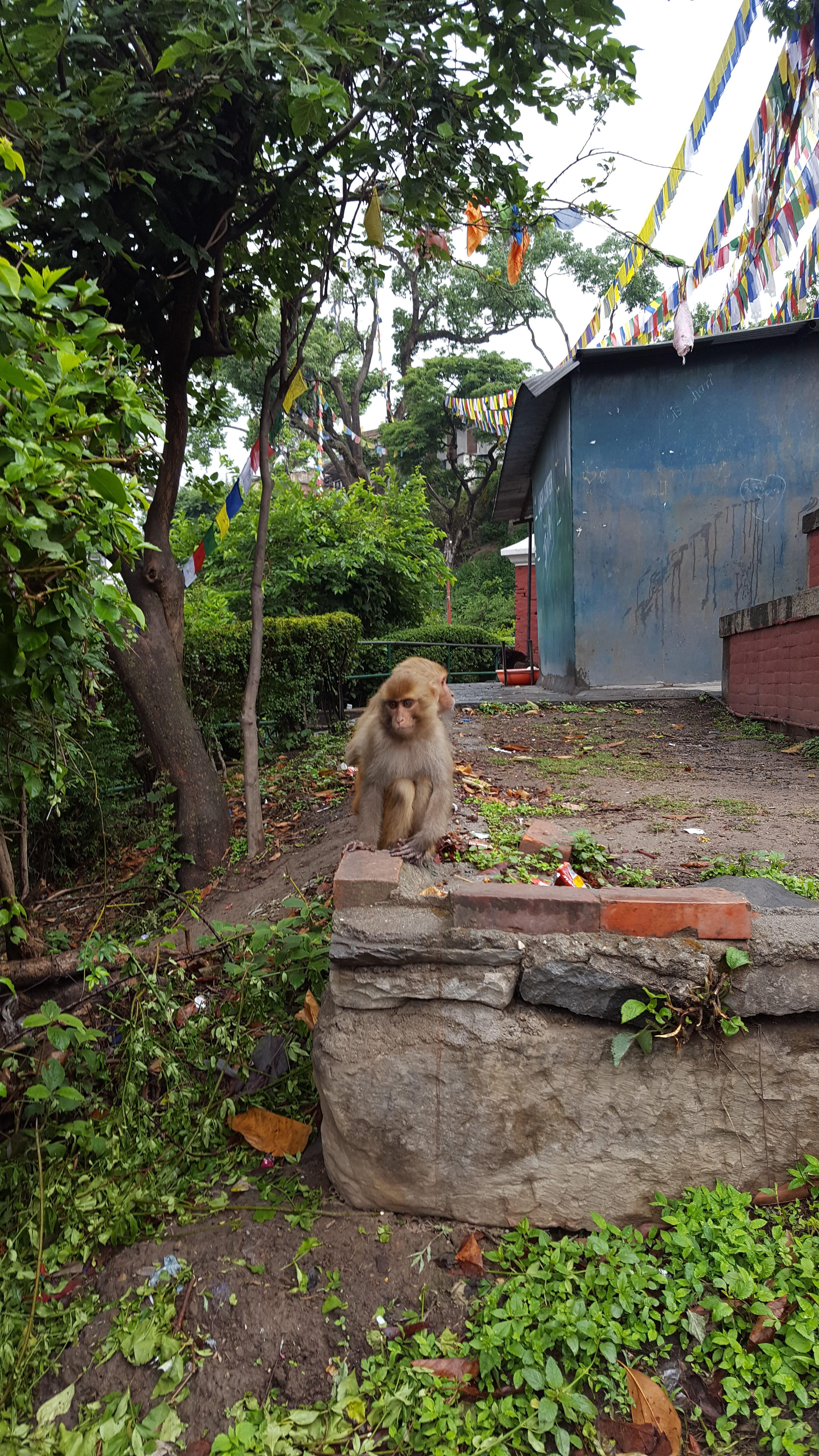 Świątynia Małp w Kathmandu